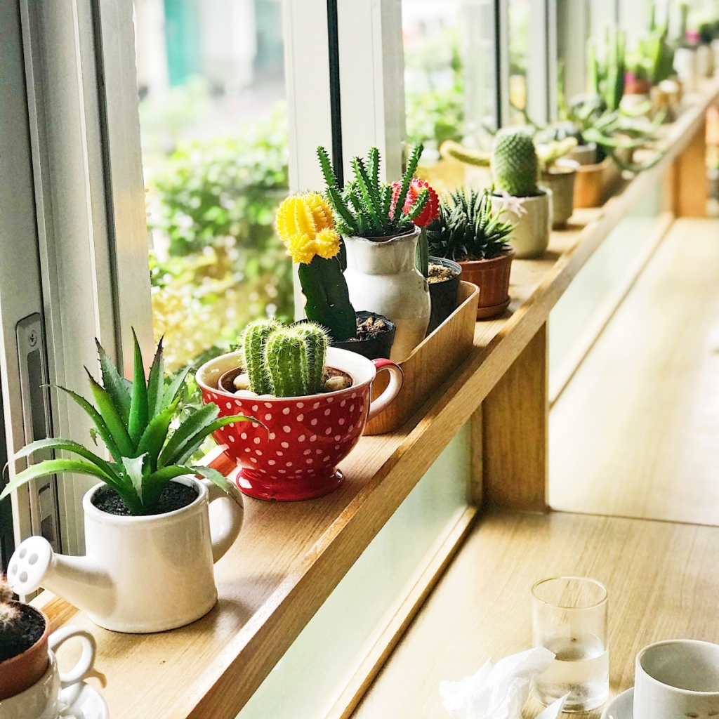 Permakültür Balkon Bahçeciliği