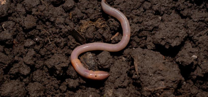 Bazı organizmalar, toprak nitrojenini bitki için kullanabilir bir forma dönüştürüyor. Diğer canlılar ise toprağı gevşetiyor ve havalandırıyor, su emilimini artırıyor.